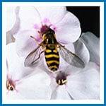 dossier_abeilles4
