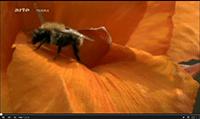 Mystere_disparition_abeilles