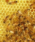 Une ruche de solutions…