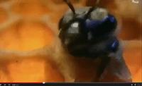 abeilles_societe_parfaite