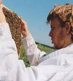 Collaborer avec les abeilles !