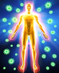 Votre armure immunitaire